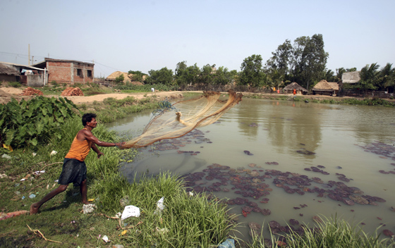 Even indian village ponds are drained by elite capture for Koi pond india