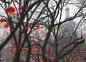 Niente visite per le feste, il carcere dei potenti cinesi è troppo pieno