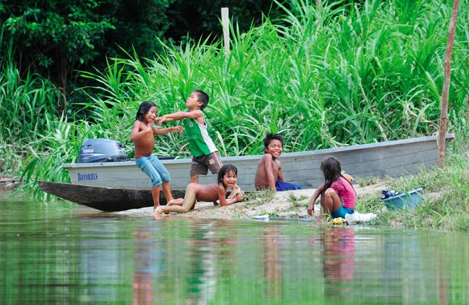 Il maestro della foresta amazzonica - Gli animali della foresta pluviale di daintree ...